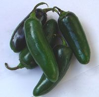 Pepper (Jalapeno Pepper)