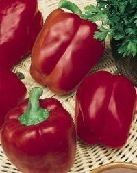 Pepper (Red Knight Pepper)