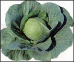 Cabbage (Cabbage)